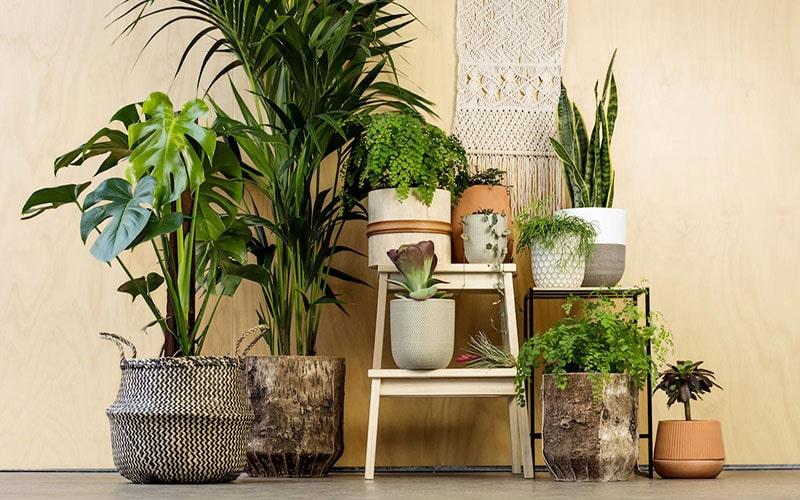 کمک گرفتن از گیاهان آپارتمانی در چیدمان منزل با بودجه کم